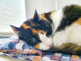 Slaapkussen Fanatieke kat
