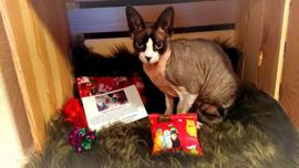 VIC (Very Important Cat) feestdagen abonnement (12 maanden)
