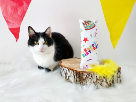 Verjaardag Snuffelzakje gym Happy Birthday met staart (gevuld met catnip)