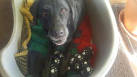 Hip speelkussen voor hond