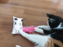 VIC (Very Important Cat) snuffelzakjes FEEST abonnement(12 maanden)
