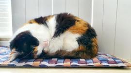(uitverkocht) vensterbankkussen Fanatieke kat