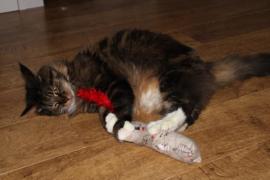 Snuffelzakje Meow met staart (gevuld met catnip én valeriaan)
