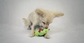 Speelzakje voor kleine hond