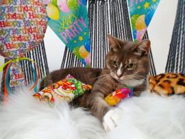Verjaardagpakket voor kat