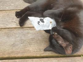 Snuffelzakje Kattenkrant (valeriaan)