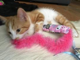 Dubbelzijdig Snuffelzakje Pink met lintjes en staart (gevuld met catnip én valeriaan en matatabi)