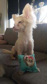Snuffelzakje voor Chihuahua