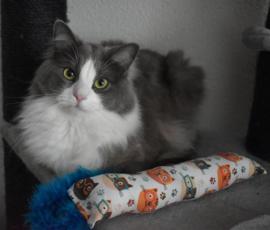 Snuffelzak Gym XXL Smart cat  met blauwe staart(gevuld naar wens)