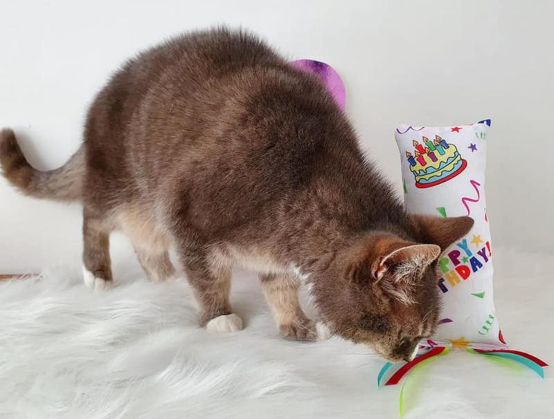Verjaardag Snuffelzakje gym Happy Birthday met lintjes (gevuld met catnip én valeriaan)