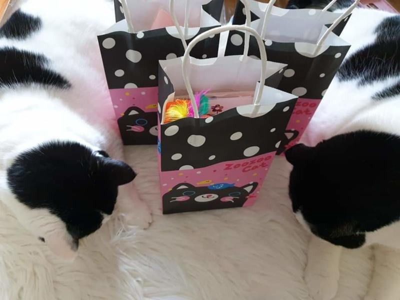 Dierendag verrassingstas (voor 4 katten)