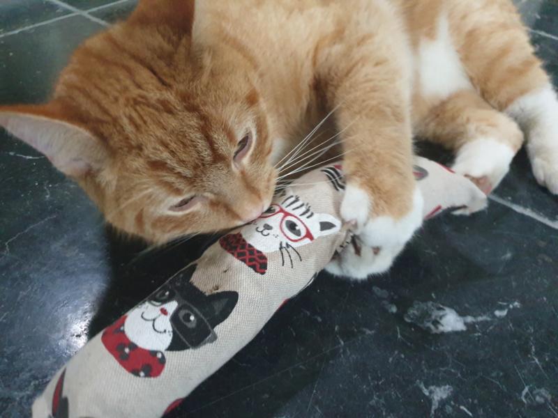 Snuffelzak Gym XXL Funny Cat (gevuld met catnip én valeriaan)