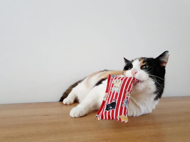 Snuffelzakje Verrassing + 1 cadeautjes (catnip)