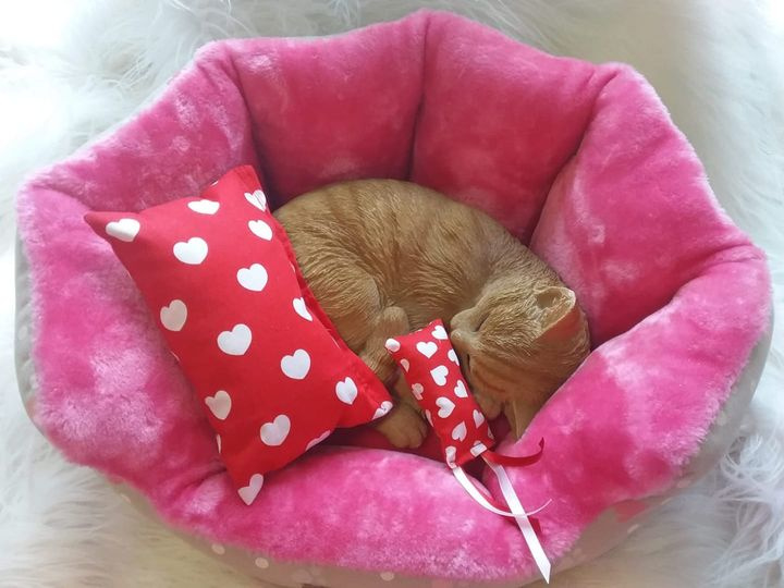 Snuffelzakjes XXL Rode hartjes + gratis mini (gevuld met catnip)