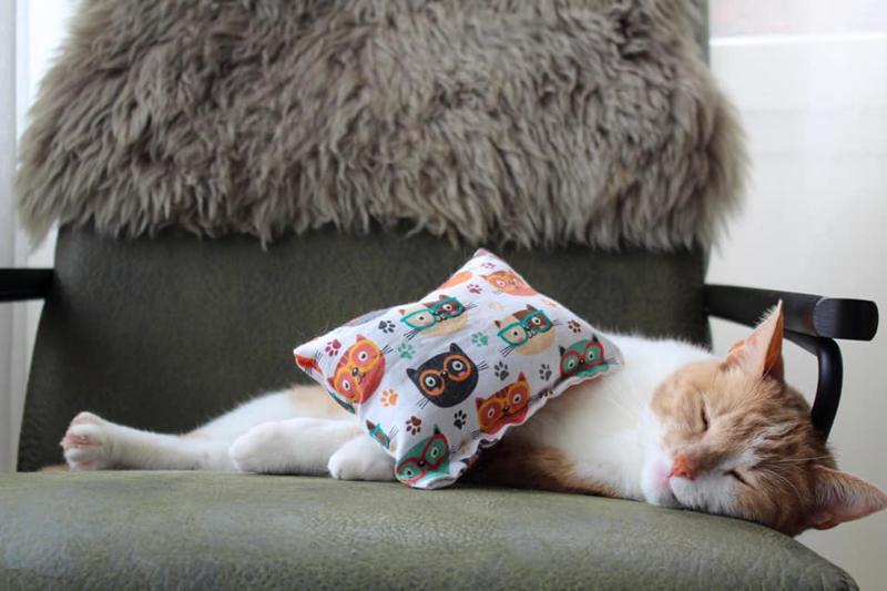 Slaap/speelkussen Smart cat (gevuld naar wens))