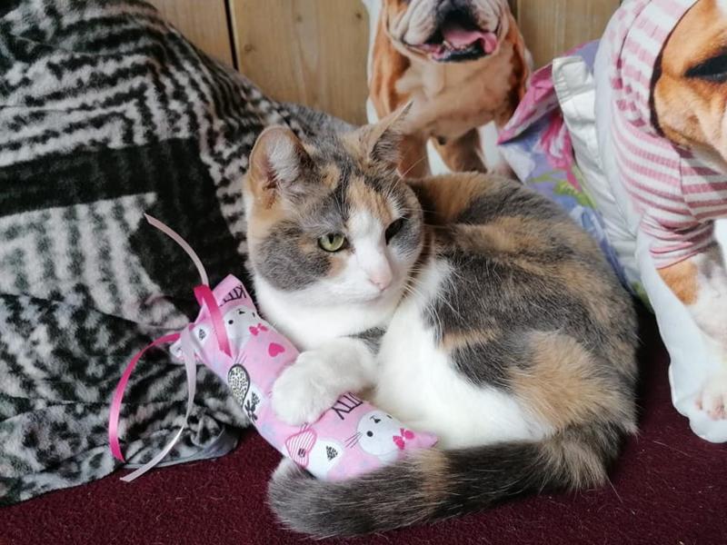 Snuffelzakje gym  Kitty met lintjes (gevuld naar wens)