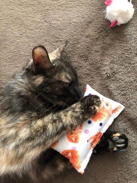 Snuffelzakje Rode kat Snoezepoes(gevuld met catnip)+ 1 cadeautje