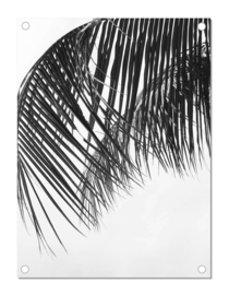 Tuinposter | Palm