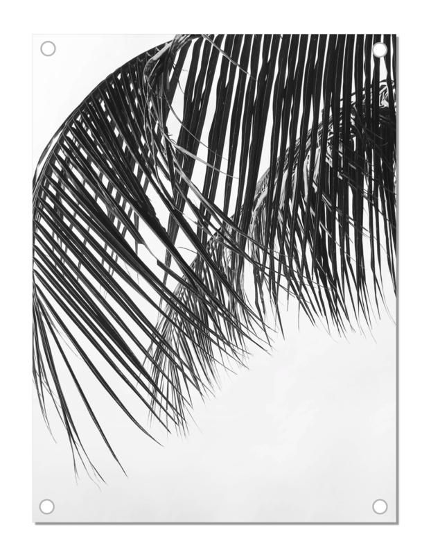 Tuinposter   Palm