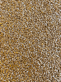 Rice gold