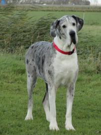 Canine Magnetix - halsband voor honden