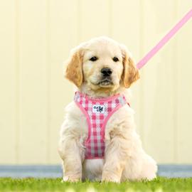 Puppy tuig setje Pink Caro