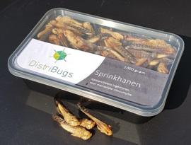 Sprinkhanen, geblancheerd ingevroren 1 kilo