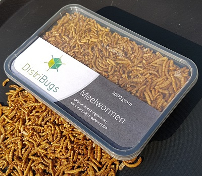 Blanched frozen mealworms, 1 kilo