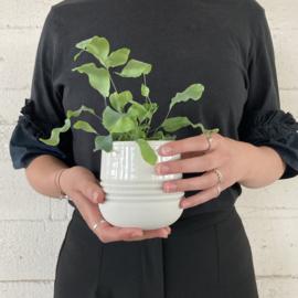 RIBBEL kleine pot