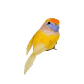 Vogeltje Geel | Rice