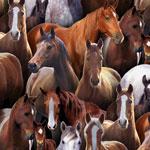 New Horses Black
