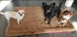 Zina, Kaylee en Riva op de Large deken van Doggieyou in de kleur taupe. zo mooi,zacht en dik!