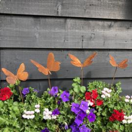 Vlinders & Libellen Roest