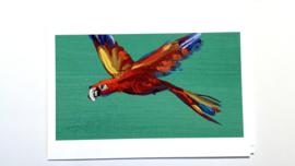 Jacco Olivier Birds luxe kaartenset (6 stuks)