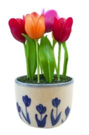 Tulpen in een pot