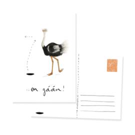 ansichtkaart struisvogel EN GAAN | per 5 stuks