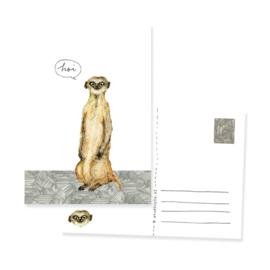 postcard meerkat 'Hoi!' (hi) | per 5