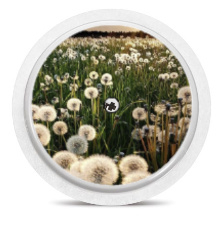 Freestyle Libre Sensor Sticker - Dandelion