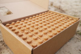 42 Qurkies Blokken