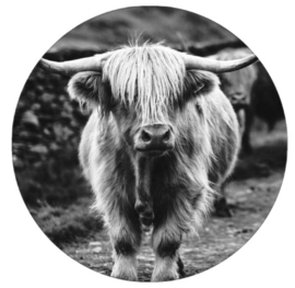 Muurcirkel | Schotse Hooglander