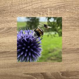 Bee-meeting