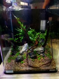 Aquaromy (Romy Verlaan) komt aquascapen bij Strijker aquarium