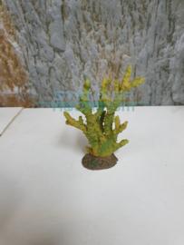 koraal klein groen