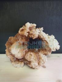 Decoratie kunst koraal rif