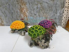 koraal op steen diverse kleuren
