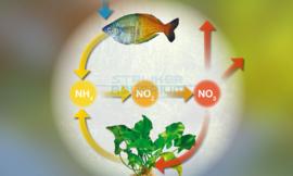Stikstofverbindingen, Ammonium, Nitriet, Nitraat