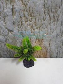 koraal groen