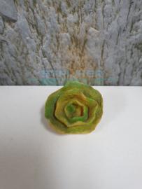 koraal steen klein groen