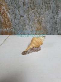 schelp op zand langwerpig