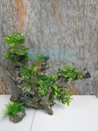 planten op hout
